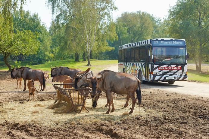 De populaire bussafari.