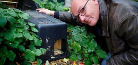 Stadsecoloog Johan Sterk maakt zich (nog steeds) zorgen om Gorcumse egels: 'Ze krijgen het moeilijker'