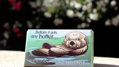 """""""Denk aan de otter!"""": milieu-organisatie brengt wel heel speciale condooms uit"""