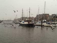 Aalscholvers teisteren haven van Urk