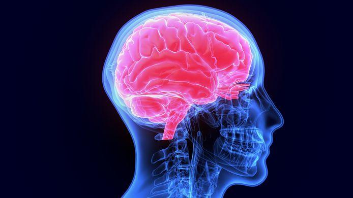 De stofjes helpen niet om slimmer te worden en om het geheugen te verbeteren.