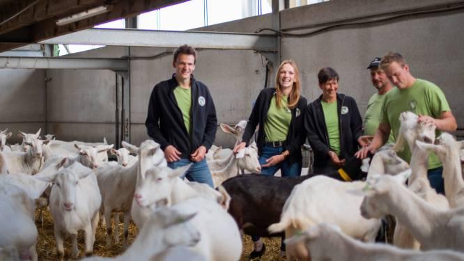 In het spoor van de Korte Keten in de regio Dendermonde: Geitenkaasboerderij 't Leenhof zag verkoop hoevewinkel verdrievoudigen