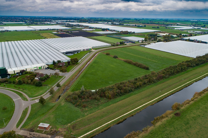 Een deel van tuinbouwgebied de Koekoekspolder in IJsselmuiden.