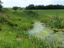 'Vissen dupe van fouten waterschap bij Haaksbergse Zoddebeek'