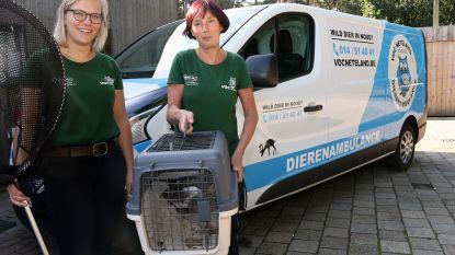Al 3.000 dieren geholpen in 8 maanden: vogelopvangcentrum stevent af op recordjaar