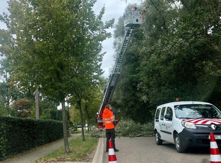 De brandweer kwam met een ladderwagen ter plekke om de bomen te snoeien.