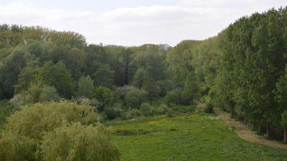 Mandelmeersen krijgen ecologisch wandelpad