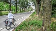 """92 wilgen in Beneluxlaan moeten weg: """"Takken vallen op fietspad"""""""