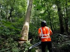 190 bomen in Gemert-Bakel gaan voor de bijl