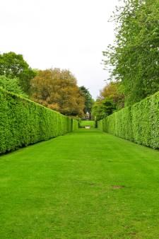 Planten met kale wortels zijn hip: dit zijn de voordelen