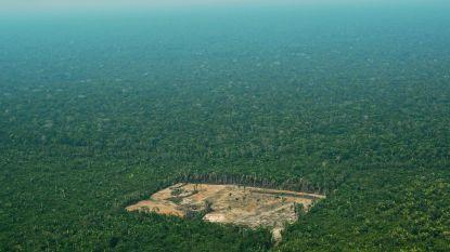 Ontbossing Amazonegebied in Brazilië op hoogste niveau sinds 2008