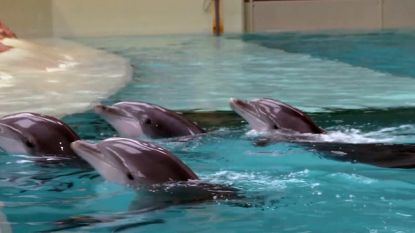 Nieuwe technologie waarschuwt dolfijnen voor visnetten via hoogfrequent geluid
