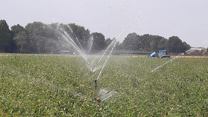 De pompen deze zomer in Zundert draaiden overuren