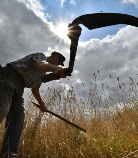 Utrechts waterschap maakt biogas van pas gemaaide bermen en slootkanten