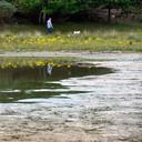 Een drooggevallen poel bij boswachterij Dorst is een jaar na de extreem droge zomer van 2018 nog steeds niet aangevuld.