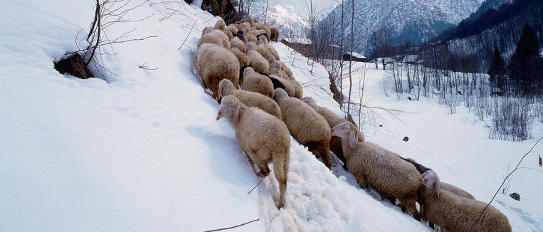 De bergen van Piemonte. Beeld Giovanni Simeone