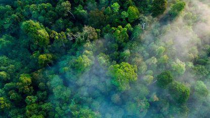 Goed nieuws voor het klimaat? Ontbost stuk regenwoud lijkt zichzelf te kunnen herstellen