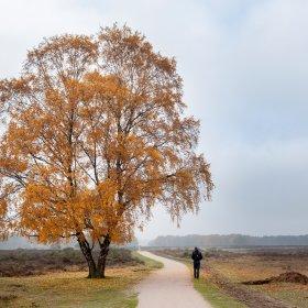 De Veluwe: een weliswaar groot, maar nogal armzalig en versnipperd natuurgebied