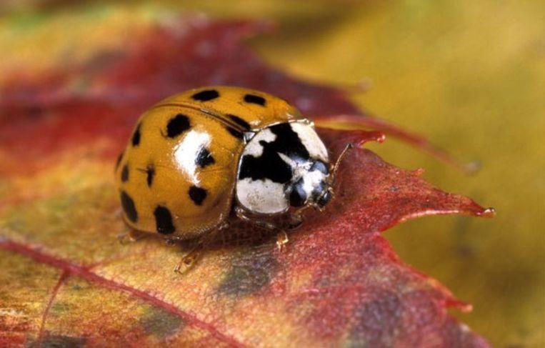 Exotische planten en dieren serieus probleem in Nederland