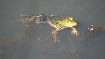 Op zoek naar amfibieën in Broek De Naeyer
