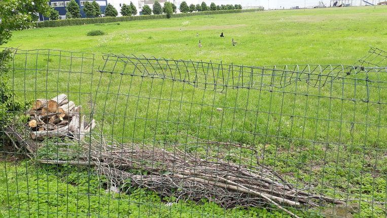 Op het terrein van Sogent mochten geen bomen geplant worden
