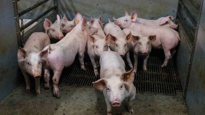 Gemeenteraad keurt uitbreiding landbouwbedrijf Vanschoubroek in Zuurbemde goed