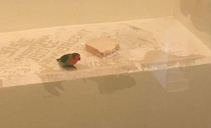 Le petit perroquet a été gardé en cellule quelques heures avec du pain et de l'eau.