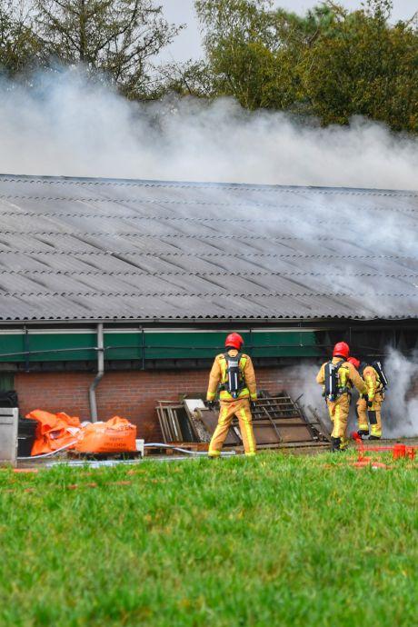450 varkens komen om het leven bij grote stalbrand in Sterksel, brandweer redt 600 dieren