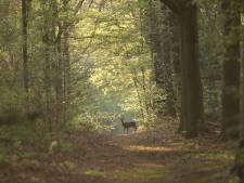 Fotowedstrijd 'Deel de Brabantse Wal' loopt boven verwachting