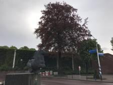 Toch nog hoop voor monumentale beuk aan het Maurickplein Vught