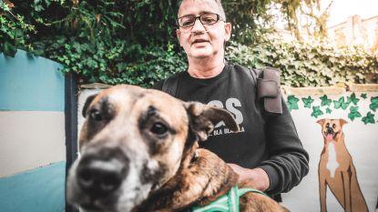 Al meer dan 200 baasjes willen hond Zino van doodzieke Peter adopteren