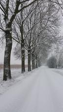 Riet Valster-Bijkerk startte vandaag met het trainen voor de 4-Daagse en kwam op de Zandstraat in Lienden dit winterlandschap  tegen.<br /><br />