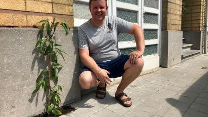 Veurne heeft zijn eerste tegeltuintjes
