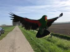 Gevlogen edelpapegaai richting Hulst gezien