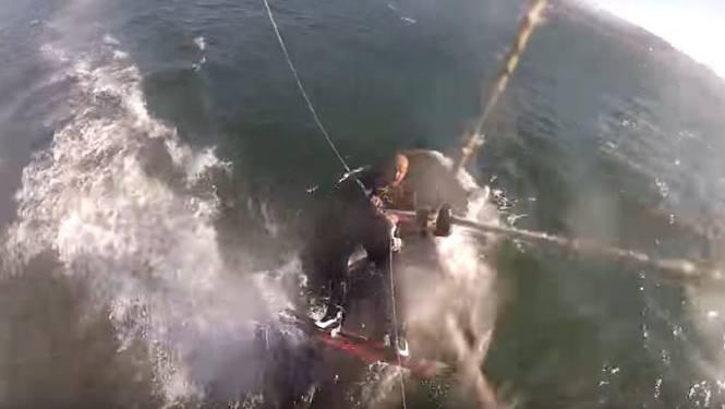 VIDEO: Kitesurfer botst (letterlijk) tegen wel heel grote verrassing aan