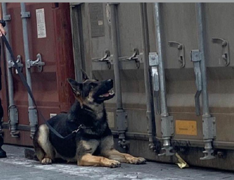 Een drugshond van de douane vond de lading in één van de acht containers