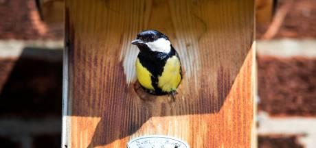 Dit vogeltje moet Epse verlossen van jeuk en uitslag