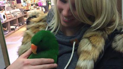 Vermiste papegaai Joske is terug thuis