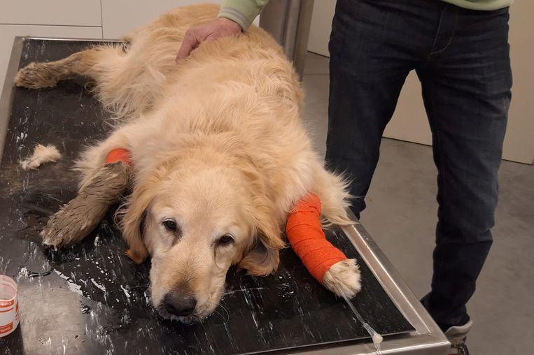 Ondanks alle zorgen overleed Zita op de tafel bij de dierenarts.