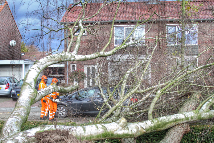 Boom op auto in Pastoor Jacobsstraat in Deurne.