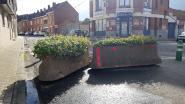 Nu glipt geen enkele wagen meer langs de knip op de Biezeweide… Stad Halle plaatst bloembaken aan paaltjes