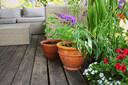 Korenbloemen en klaprozen lijken misschien leuk in een pot, maar zijn wel na drie weken uitgebloeid.
