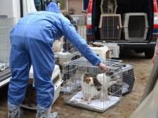Politie: stop haatberichten richting omstreden hondenfokker Lettele