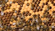 Tijdelijk verbod op voor bijen gevaarlijke pesticiden