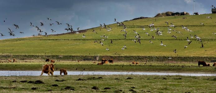 De afvalberg van De Spinder, pal tegen natuurgebied Huis ter Heide, is onderdeel van Landschapspark Pauwels.