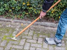 Westland Verstandig wil meer toezicht op groenbeheer: 'Alleen laatste tien minuten wordt er iets gedaan'