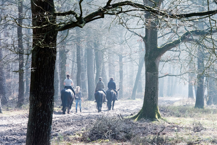Ruiters in de Veluwse bossen.