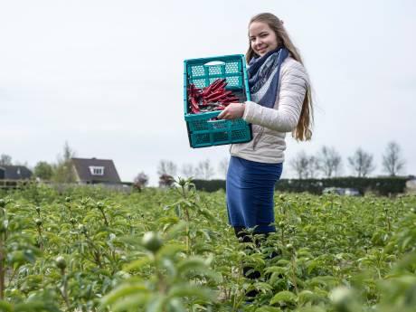 Geen hamburgers, maar pioenrozen uit 'flowerdrive' in  Kruiningen