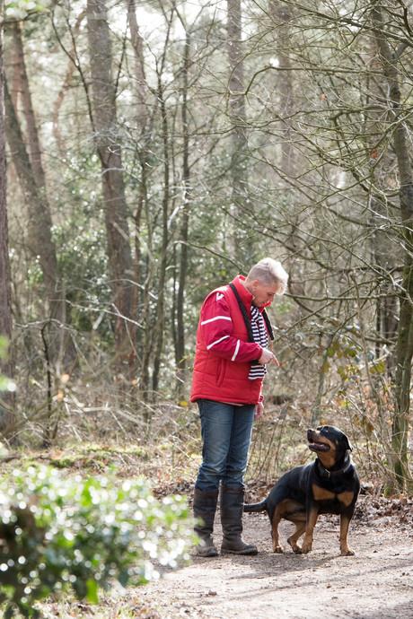 Hoe veilig is het Harderwijkse hondenbos?