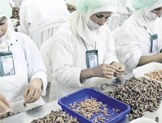 Weet wat je eet: waarom wordt 90% van onze noordzeegarnalen in Marokko gepeld?